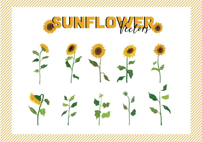 Cùng đón ánh nắng mùa hè cùng bộ hình hoa hướng dương tươi tắn cùng colorMe nhé ^^